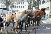 23è Foire aux chevaux