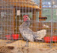 Exposition internationale d'aviculture