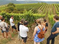 De la vigne au verre - Les Rendez-vous de l'été avec Terres de Syrah