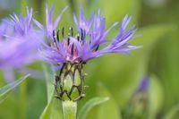 A la découverte des plantes sauvages - Sortie botanique