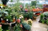 Le Jardin de Chauffin, Horticulteur entre Pontcharra et Crolles