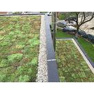 Entretien de toiture végétalisée, Lyon, Villefranche