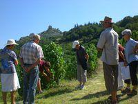 Visite de vignobles : Domaine Rémy Nodin