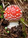 Sortie découverte des champignons