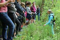 Sorties nature autour des Plantes Santé - Secrets de Plantes Vertueuses