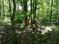 Ateliers en forêt