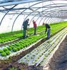 Marché de producteurs, bio et local - Mois de l'Economie Sociale et Solidaire