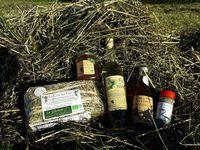 Les Estivales : découverte des plantes bienfaisantes dans la nature