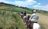 "Balade à cheval et à poney - niveau ""confirmé"""