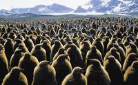 """Exposition temporaire : """"Tous semblables, tous différents : quand la biodiversité nous relie"""""""