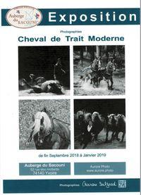 """Exposition photo """"Cheval de trait moderne"""""""