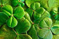 Soirée irlandaise, concert et repas