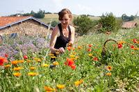 Visite du champ libre : Plantes aromatiques et médicinales