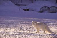 Activité intérieure: jeux sur l'adaptation des animaux en hiver