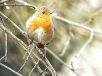 Annulé - A l'écoute des chants d'oiseaux