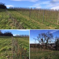 ANNULEE - Visite-découverte de l'agroforesterie