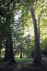 Visite découverte du Parc du château de Pont-de-Veyle
