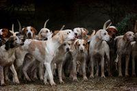 Fête de la nature et des chiens de chasse
