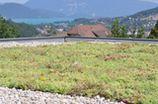 Toits végétalisés en Drôme, Des Racines et des Murs