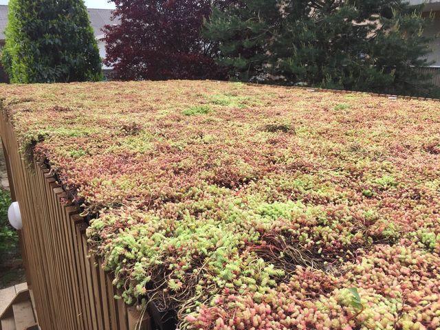 Toit végétal à Aix-les-Bains, en Savoie (73) et sur toute la région Rhône-Alpes