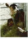 Chèvrerie de Chartreuse