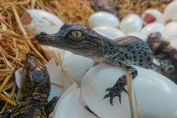 Qui dit Pâques, dit chasse aux oeufs ! à la Ferme aux Crocodiles