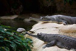 La ferme aux crocodiles rouvre ses portes le 21 mai !