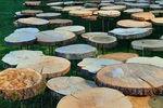 L'Appel de la forêt, installation d'art contemporain à Vizille
